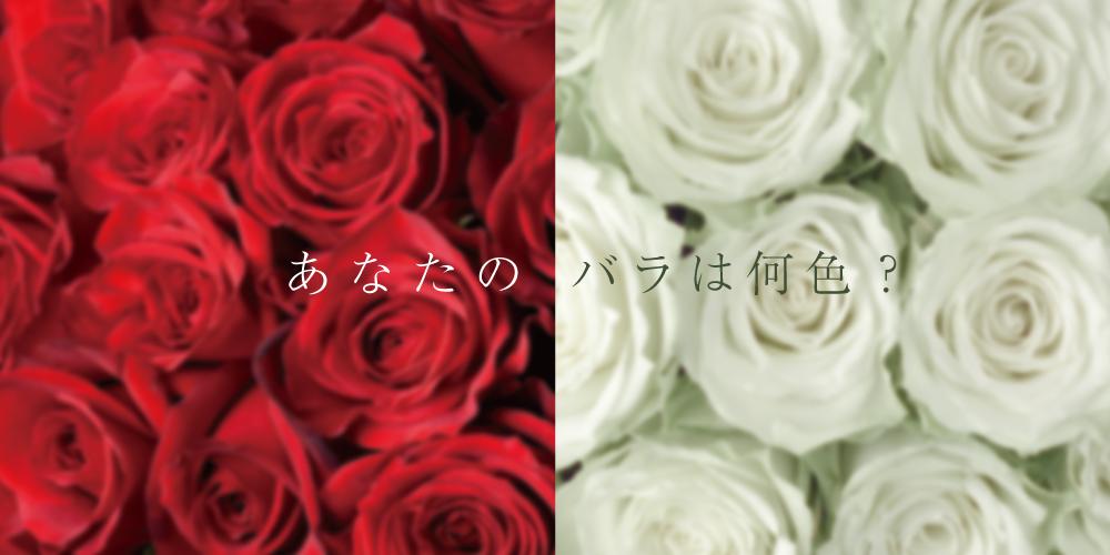 あなたのバラは何色?